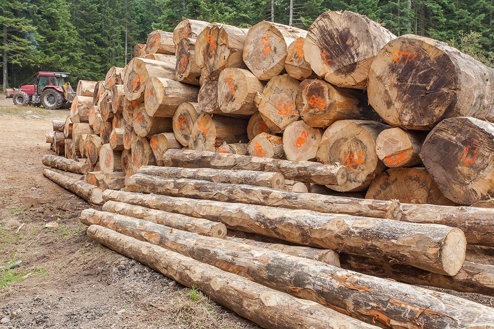 Vente et livraison de bois